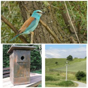 rollers and nestboxes